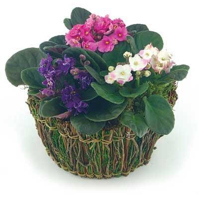 Фото находится также в разделах цветы